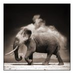 nick-brandt_s-e28098elephant-with-exploding-dust-amboseli