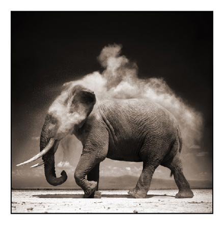 nick-brandt_s-e28098elephant-with-exploding-dust-amboseli