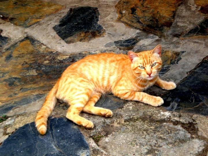 1-gato-en-la-vallina