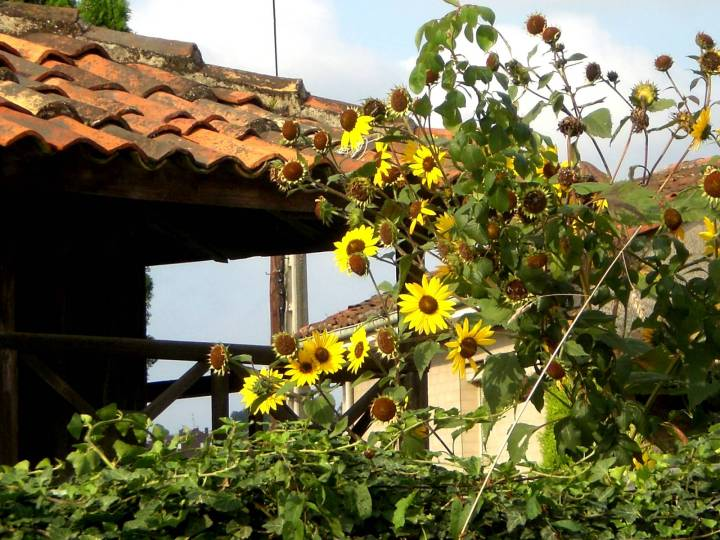 106-fragmento-de-horreo-y-girasoles