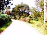 165-de-camino-a-santiago-del-monte
