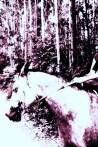 174-por-primera-vez-sobre-un-caballo
