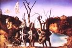 cisnes-reflejando-a-elefantes